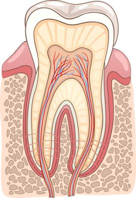image of Root canals